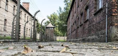 Could the Pope Have Saved Jews During the Holocaust?